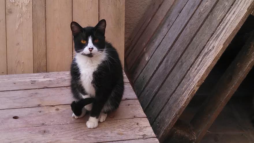 Brutal chatte noire