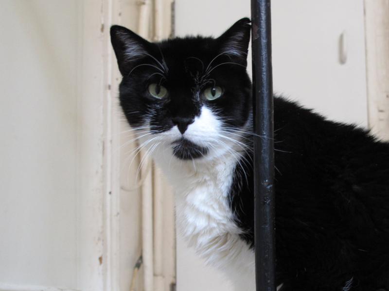 133 se nommait déjà comme ça à son arrivée. Il a posé ses pattounes à l'âge de 6 mois. En 2003. Il n'était à l'époque, câlin qu'avec Marie-Claude. 133 n'a jamais été adopté. Trop grand, pas assez... Personne n'a jamais voulu lui donner sa chance. Alors il a trouvé son foyer, ici. Un beau chat élégant, mais intouchable. A la fin de sa vie, 133 nous suivait et miaulait pour avoir à manger. Il avait notamment de graves problèmes digestifs. Il s'est accroché à la vie jusqu'au bout. 133 était heureux ici. Et nous y étions très attachés.