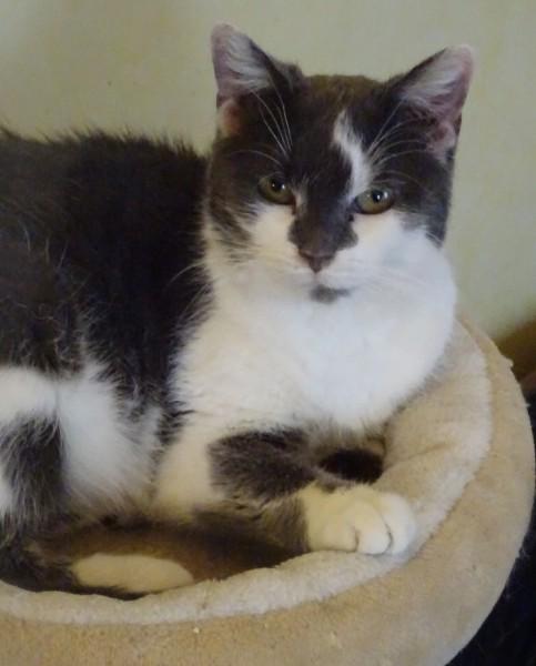 Emy est une gentille minette, impatiente de rejoindre son foyer pour la vie. Contactez nous pour plus de renseignements. Emy vous attend à l'adoption.