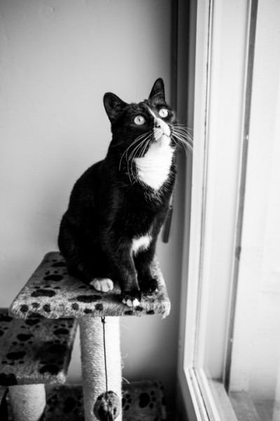 Kira est une petite chatte noire et blanche d'environ 1 an et demie, très caline et pot de colle.