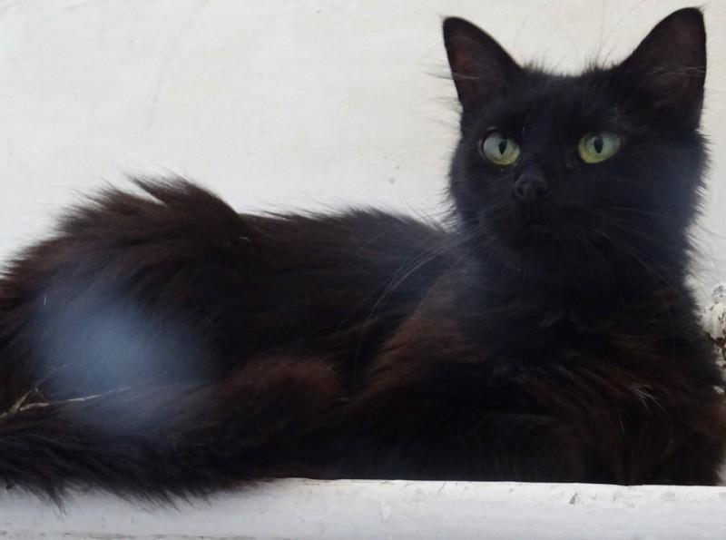 Jeune adulte, Diva est une belle angora calme et tranquille. Elle porte bien son nom, et souhaite être l'unique chat de la maison.