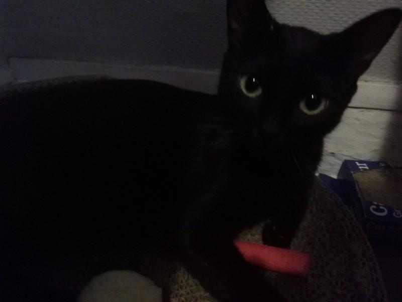 Bagherra a été trouvée dans un squat. Elle a mis au monde 4 chatons, tous adoptés depuis. Cette toute jeune minette a également trouvée son foyer. Elle est à présent heureuse et choyée!
