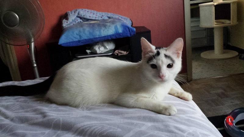 Mowgli est un jeune chat âgé d'un peu moins d'un an, à l'adoption sur Paris.
