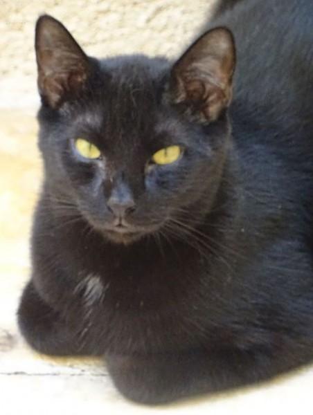 Orpy est un jeune adulte discret,  un brin timide au départ, mais qui s'épanouira au bout de quelques jours. C'est un gentil chat, qui a simplement une petite timidité, touchante à nos yeux. Sociable et câlin, il est ok chats et aimerait tant avoir enfin son propre foyer. Il vous attend de pattes fermes, à l'adoption sur Paris!
