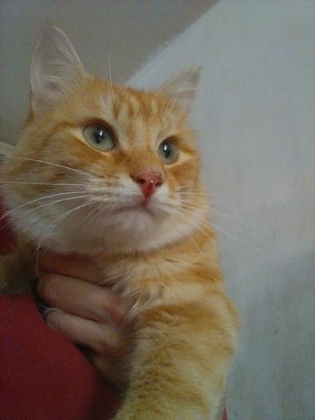 Pablo est un jeune chat âgé de quelques mois, particulièrement gentil et sociable. Il se laisse prendre dans les bras, et est habitué à vivre en appartement sans aucun souci. Il vous attend à l'adoption sur Paris.