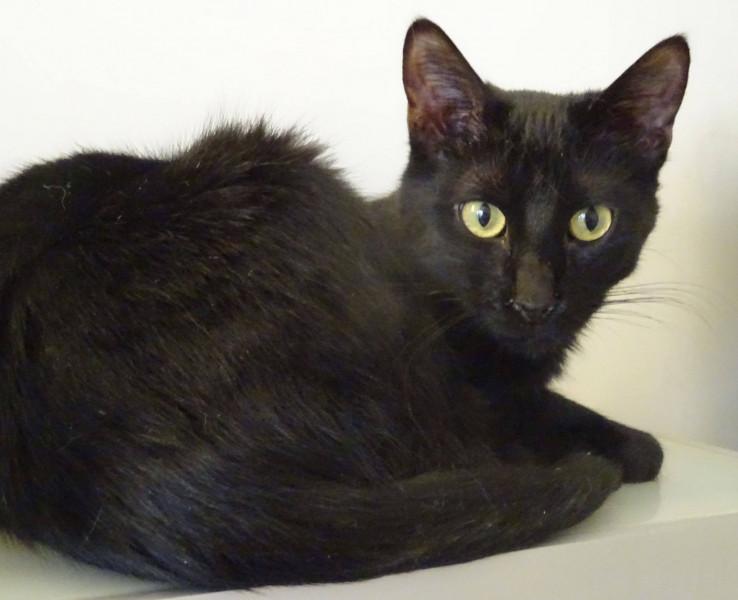 Vicki est un chat calme, câlin, plein d'amour et de tendresse. Il adore qu'on le regarde et qu'on lui parle, notamment quand il mange ;-).