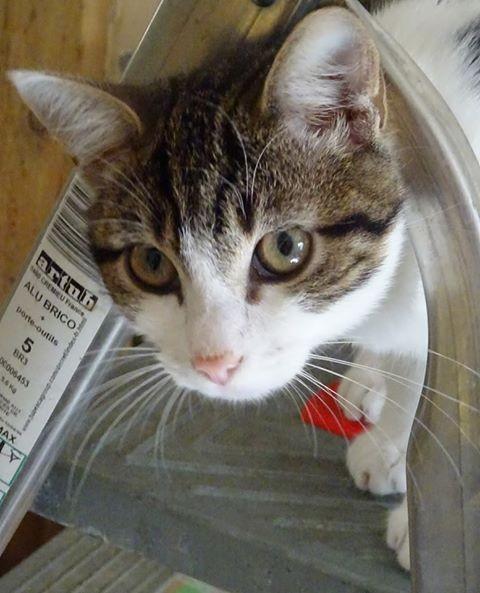Volupté est une jeune chatonne âgée d'environ 5 mois. Câline, curieuse et à l'aise.