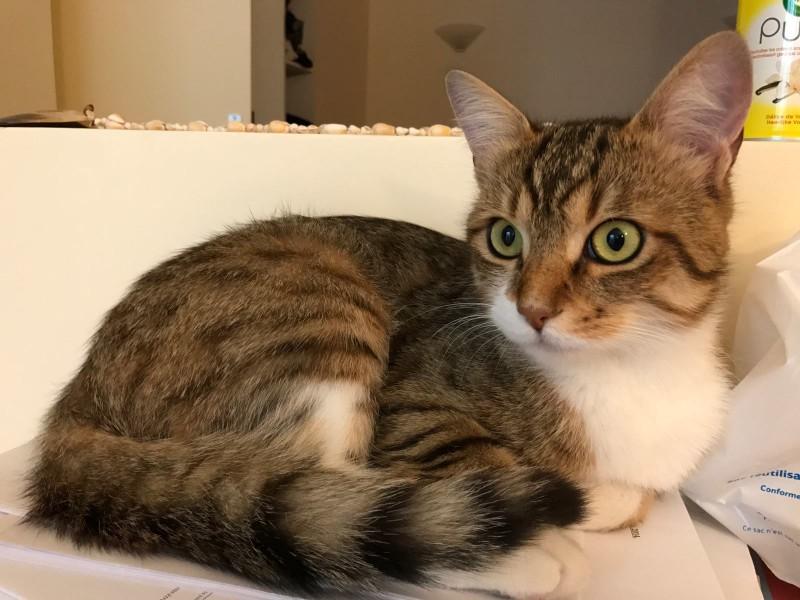 Antonin est âgé de 8 mois environ. C'est un jeune chat curieux, et gourmand Adepte de la sieste, il n'est jamais contre une partie de jeu. Chat sociable, et à l'aise il saura vous faire apprécier sa présence. Antonin adore passer du temps dehors. Un accès à une cour ou bien un petit jardin sera donc indispensable à son bonheur. Il vous attend à l'adoption sur Paris!