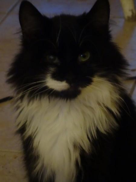 Athos est un très gentil chat, adulte, très câlin et calme.