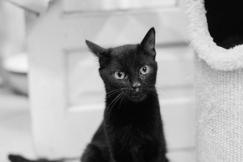 Elle reprend confiance et est une petite chatte très douce et dynamique !