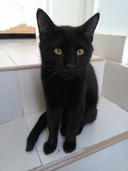 Bazil avait moins de deux ans. Si jeune et tellement inoubliable. Petit Bazil avait posé ses belles pattounes chez nous il y a quelques mois. Petit chat extrêmement sociable, câlin, tout en douceur et curieux. Bazil avait eu des petites crises d'épilepsie, ce qui le rendait parfois un peu maladroit dans ses mouvements. Malheureusement, il est tombé gravement malade. Une maladie détruisait ses globules rouges. Bazil s'est battu longtemps, avec courage et une force exemplaire. Mais même les plus grands se fatiguent au combat. Bazil s'est éteint paisiblement. Nous regrettons beaucoup ce petit chat inoubliable, au caractère exemplaire et au coeur si grand.