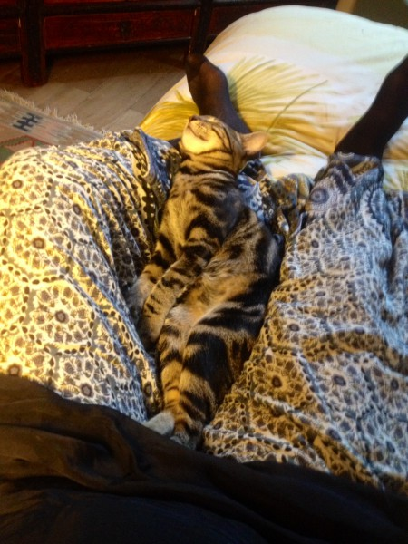 Bonhomme est heureux dans un foyer où il fait bon vivre. Adopté chaton il y a quelques mois, il s'est épanoui sous le regard bienveillant et attentif de sa famille. Mais aussi accompagné de la protection de son grand frère et sa grande soeur chats! Un peu étonnés au départ, mais qui au final, n'ont pas pu résister à son charme. Nous leur souhaitons beaucoup de bonheur !!