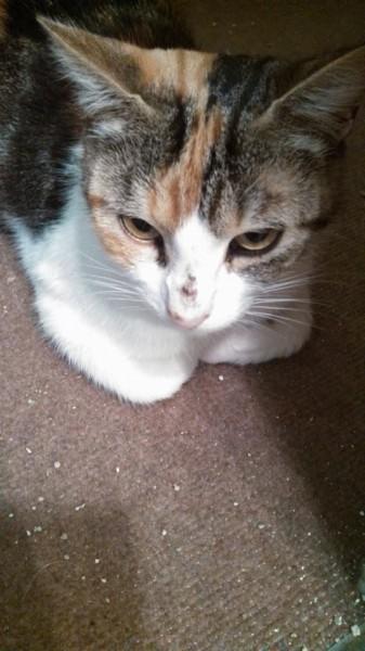 Ponette vit à présent heureuse et aimée au sein de son foyer.Douce, discrète , elle vit à présent dans un foyer aimant bien méritée !