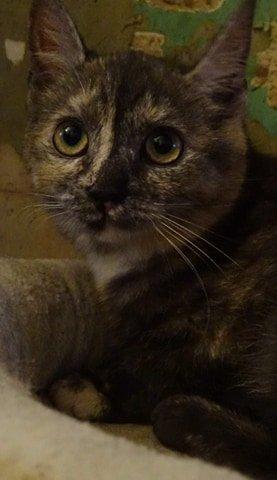 Bulle est une chatonne très souple de caractère, câline, joueuse et douce. Elle vous attend à l'adoption sur Paris.