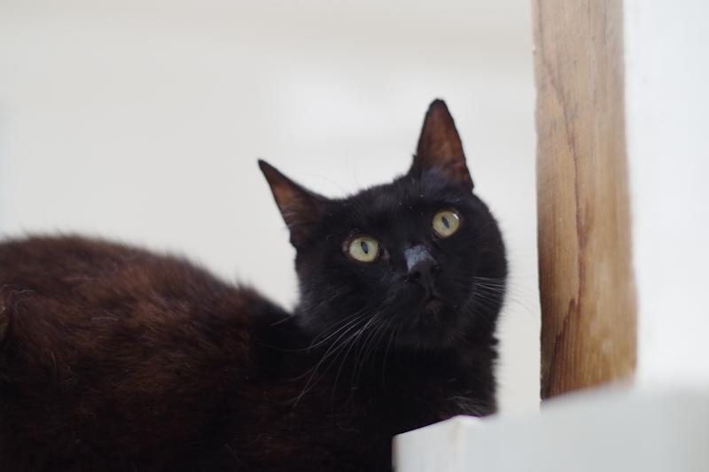 Cachou garde son petit caractère et si un autre chat s'approche de lui il sait se faire entendre !