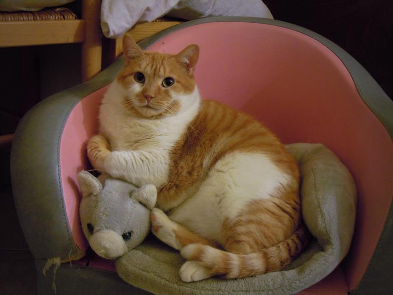 Capucine est une adorable petite chatte blanche et rousse ! La dodue demoiselle a été placée à l'association parce qu'elle avait un caractère considéré comme difficile.Nous, nous le cherchons encore son caractère difficile...