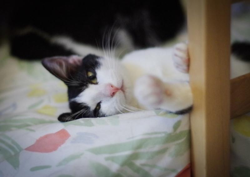 C'est une petite chatte curieuse et observatrice.