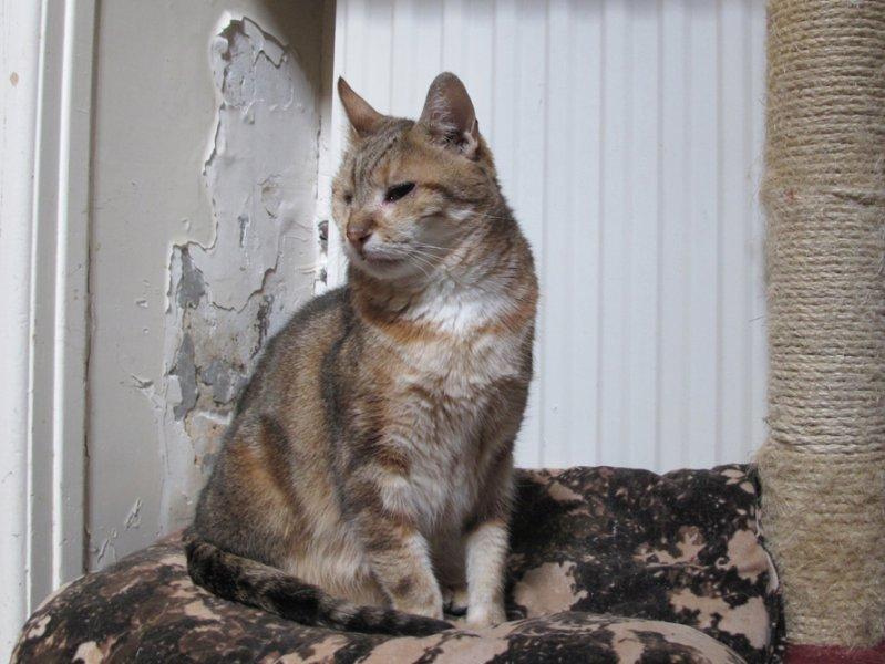 A son arrivée, les vétérinaires ont été obligés de l'énucler. Le sort s'acharne sur elle car elle a aujourd'hui un cancer inopérable de la mâchoire.