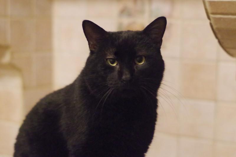 Coco a posé ses pattounes chez nous il y a un peu plus de 5 ans. Il était alors un grand matou avec une sacrée carure. Mais surtout, un gros gentil félin au coeur tendre, qui miaulait avec une toute petite voix. Coup de coeur de tous, copain avec les chats, on ne pouvait que l'aimer. Notre beau Coco s'est malheureusement éteint, et son beau regard s'est fermé. Coco était atteint d'un cancer. Il s'est endormi dans les bras de sa sauveuse.Nous n'oublierons jamais ce chat si gentil, si aimant, aimé de tous. Il laissera un grand vide dans nos coeurs et auprès de ses copains chats...