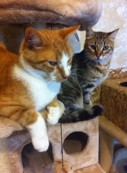 Cookie a été adopté et depuis il connait enfin le bonheur ! Nous lui souhaitons une heureuse et doucve vie.Nous nous souvenons avec tendresse de ce beau chat qui attendait sa famille.