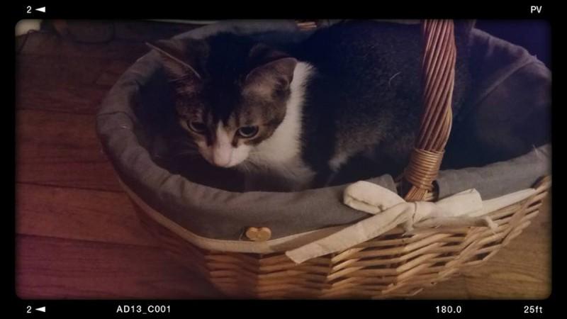 Un petit bout de chaton adorable et craquant, très attachant? Diego bien sûr! Toute l'équipe s'était attachée à ce chaton câlin et pot de colle. A présent adopté, il a passé son premier Noel en famille. Et il y a fait sensation! Belle vie Diego.