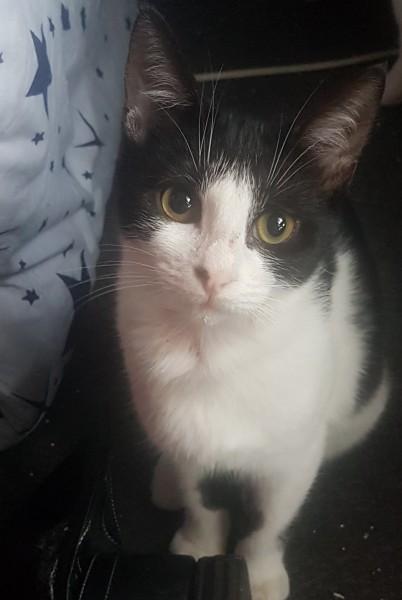 Voici une adorable chatonne! Il s'agit de Domino. Comment résister. On ne peut que s'attacher à cette petite, qui adore les câlins et s'amuser. Domino attend avec impatience sa famille pour la vie. Ravie de faire la une ce matin, voici une petite vidéo d'elle afin de bien commencer la semaine. Domino vous attend à l'adoption sur Paris. Contactez-nous!