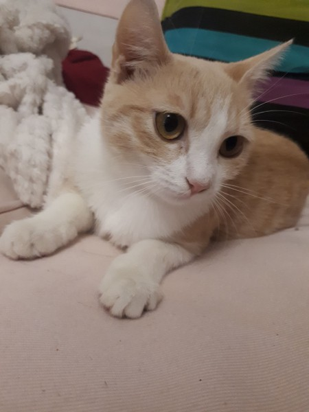 Flamme est âgée d'environ 5 mois. C'est une chatonne très attachante, qui aura simplement besoin d'un peu de patience avant d'être à l'aise. C'est une adoption sauvetage. Si vous avez un peu de patience, que vous êtes d'accord pour lui laisser le temps de venir vers vous, contactez-nous! Elle mérite une belle vie.