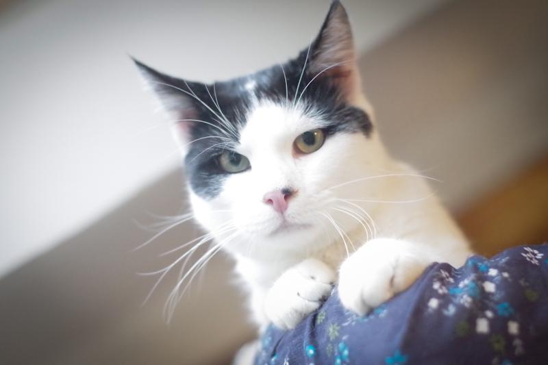Francis est un chat très câlin et très affectueux.