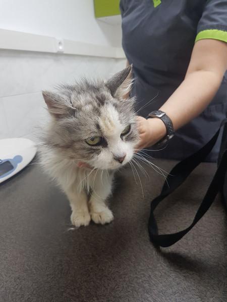 Freyja est une mamie chat âgée de 19 ans. Cette adorable mamie chat a été abandonnée. Nous l'avons prise en charge. Elle souffre actuellement d'une pancréatite, et est en soins.