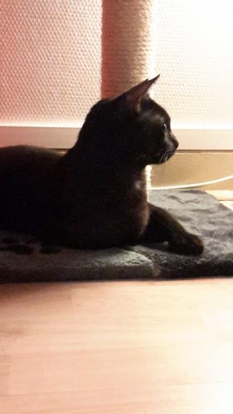 Ganon est un chat curieux, câlin et coquin. Il rend pleinement heureux ses adoptants !