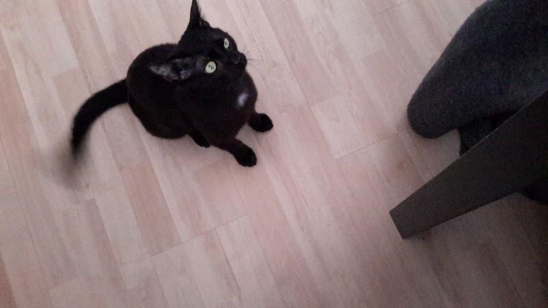 Ganon a été adopté en fin d'année dernière. Arrivé chaton, après avoir connu le stress et la peur en fourrière. Il est à présent heureux et choyé par sa famille.Il a bien mérité autant de bonheur et nous ne pouvons leur souhaiter que beaucoup de bonheur !