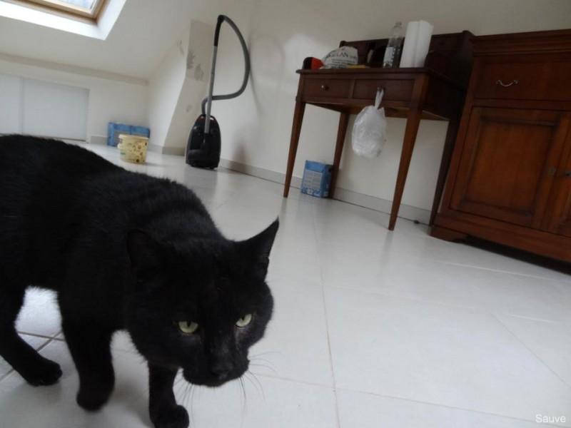 Gavroche,8ans, est un adorable et grand chat noir qui réclame des câlins en donnant d'affectueux coups de tête. Très doux, il profite pleinement de sa vie de chat après avoir connu la fourrière et l'abandon.