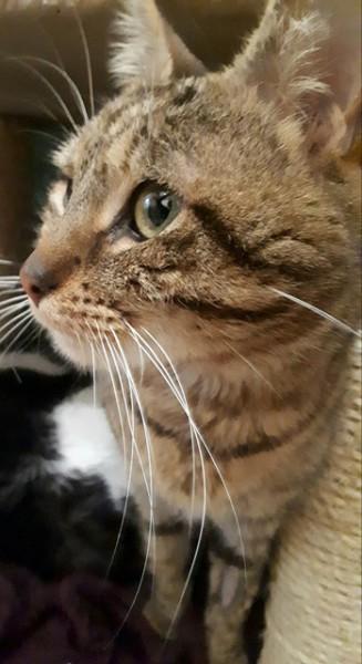 Grigri est un amour de félin. Agé de 9 ans, il a été abandonné par sa famille, qui n'en voulait plus. Ce chat est un amour, extrêmement gentil et câlin. Chat calme et discret, il espère pouvoir bientôt profiter d'une seconde chance.