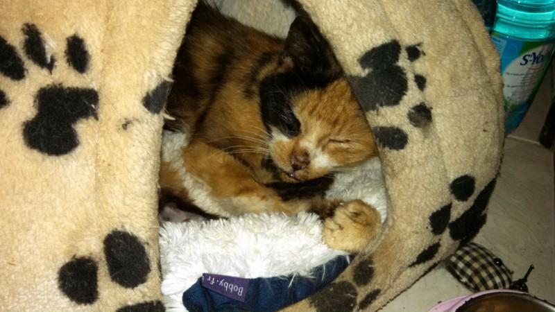 Grimace est une mamie chat âgée d'une dizaine d'années. Ses couleurs sont très belles et son regard troublant. Son nom lui vient de la clinique vétérinaire qui l'a soigné, car elle n'était que