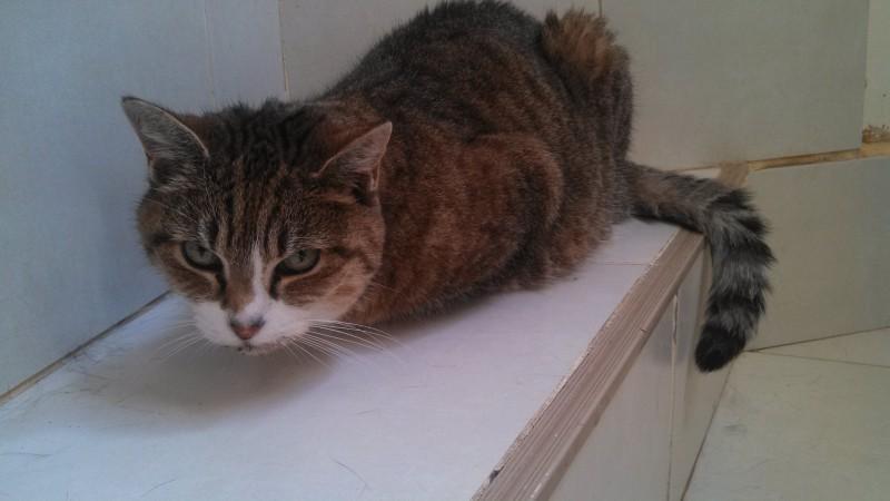 Melodie, chatte sénior âgée de 17 ans, vit heureuse et choyée auprès de sa famille de coeur. Douce et délicate, elle n'est que caresses .Elle profite chaque jour de sa retraite dorée ...