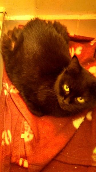 Frimousse est une mamie chat arrivée récemment à l'association et actuellement en famille d'accueil. Chatte errante et abandonnée, elle vit désormais au chaud et profite de jours plus paisibles.