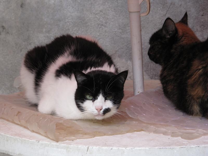 Quand elle avait 6 mois, Jasou s'est retrouvée coincée dans le trou d'un mur avec sa soeur, face à une personne qui voulait les tuer. Sauvée de justesse, elle n'a plus jamais tolérée qu'un humain s'approche d'elle. Jasou était très protectrice avec les autres chats. Elle était notamment proche de Sybelle. Devenue mamie, elle appréciait les pâtés appétentes, et ne dormait que sur des couvertures rouges. Que nous lui réservions. Avec l'âge, Jasou était devenue câline. Elle miaulait très fort afin d'obtenir nos faveurs. Et gare à vous si vous ne veniez pas tout de suite, elle n'en miaulait que plus fort! Jasou était touchante, et son décès avait attristé toute l'équipe.