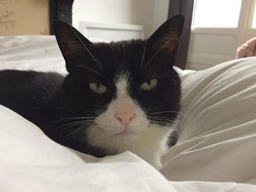 J'ai d'abord adopté Mechior, 1 ans. Celui-ci se sentant un peu seul, je suis devenue famille d'accueil, pour mon plus grand plaisir ! Un soir, j'accueille en urgence un chat, Jules, 2 ans et demi, sorti de la rue et manifestement pas mal chahuté par la vie.  Jules est extrêmement craintif et passe 1 mois caché sous le lit. Pourtant je sens que ce chat cache plein de qualités et de tendresse : d'abord il est très gourmand, ensuite il ronronne très fort lorsque j'arrive à l'atteindre pour lui faire quelques caresses, et enfin il interagit avec Melchior de façon très douce et bienveillante (ils se câlinent et se font la toilette mutuellement).  Un jour, Jules décide que c'en est assez et il sort de sa cachette ; il commence à visiter l'appartement, timidement au début, puis prend confiance, il joue avec Melchior ou avec les balles qu'il croise, il m'observe à distance au début, puis de façon de plus en plus rapprochée. Chaque semaine apporte ses nouveaux progrès et ses nouvelles joies et j'ai tout naturellement décidé de l'adopter.  Aujourd'hui, Jules est un chat très câlin, très doux et tendre, plein d'attentions (il vient me réveiller tous les matins avec des caresses !). Il est bien sûr encore sur ses gardes mais quelle joie de pouvoir lui apporter un foyer, de voir que la patience et la bienveillance marchent et que mes efforts me sont rendus au centuple !