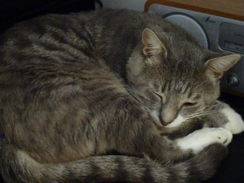 Kenzo est un très gentil chat, calme et discret. Chat de famille et habitué à vivre en appartement, il vous attend à l'adoption sur Paris.