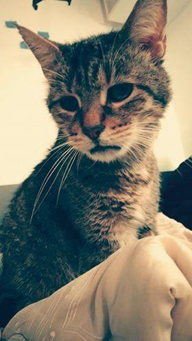 Quelques nouvelles de Kiwi, mon petit bébé d'amour qui depuis plus d'un an partage notre vie! Kiwi se porte bien, il est heureux dans notre petit cocoon. Il se porte bien, il est toujours aussi affectueux et câlin. En prime des quart d'heure de folie oú l'on joue ?. Le 1er avril il aura 14ans l'occasion de vous faire un nouveau coucou. Nous souhaitons à tous les autres chats en adoption la même chance et le même bonheur qu'à Kiwi. Amicalement Kiwi et Chloé.