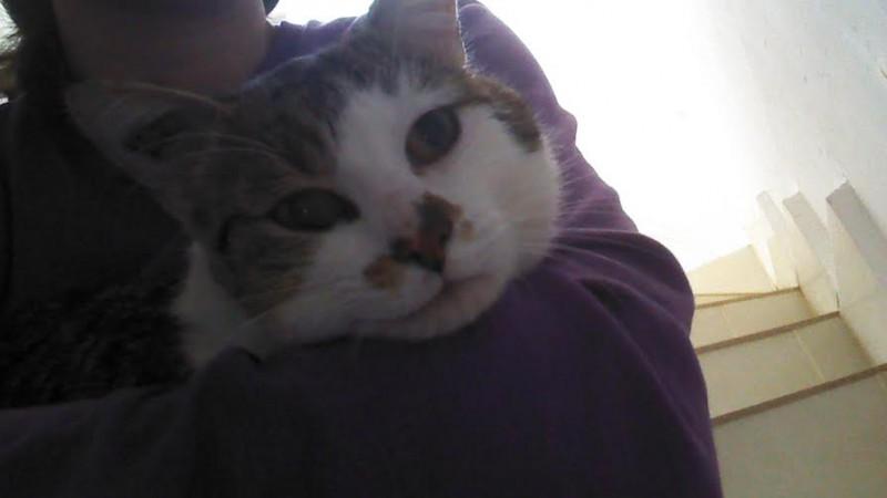 Lemon est jeune chat adulte extrêmement câlin et sociable.Calme, gentil, il aime être pris dans les bras et s'y endormir en ronronnant.