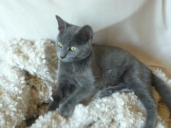 Leo est une jeune mâle gris, calme, tout en douceur et sociable.Il aime les câlins et les longues siestes sur le canapé.