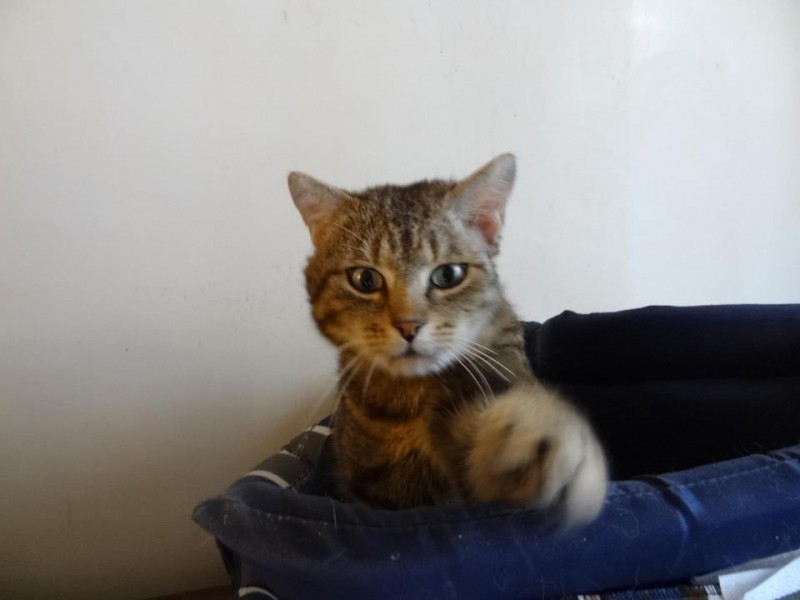 Leo, adorable chat calme et très câlin aux magnifiques yeux verts.Très tendre,il  a su faire fondre le coeur de son adoptante. Heureuse et douce vie Leo!