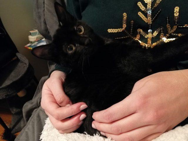 Lilas est une gentille chatonne, très câline. Une fois à l'aise, elle aime explorer son nouvel environnement.