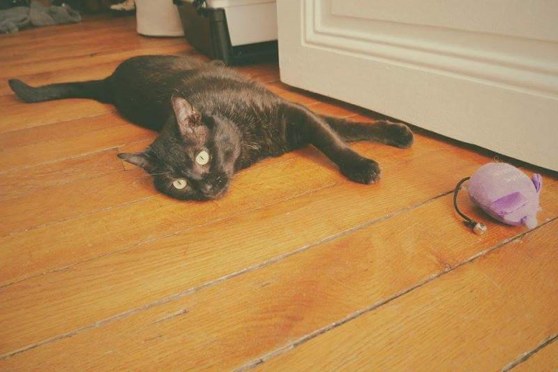 Après avoir connu le stress de la fourrière, Loulou a su conquérir le coeur d'un gentil couple, qui a craqué pour lui. Cet adorable chat noir, sociable et tout en tendresse, vit à présent pleinement heureux ! Il profite d'une vie calme et posée, entouré de câlins. Nous leur souhaitons beaucoup de bonheur .