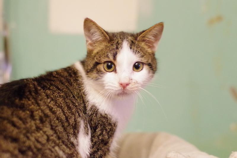 Marcel est un superbe petit chaton, sorti de fourrière et soigné il n'attend plus que vos câlins !