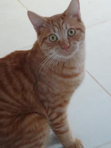 Menphis est un jeune chat sociable, curieux et câlin. La raison de son petit air étonné sur ces photos? Il n'a tout simplement pas l'habitude d'être le centre de l'attention, et ne savait comment prendre la pose ! Le beau Menphis vous attend à l'adoption, sur Paris