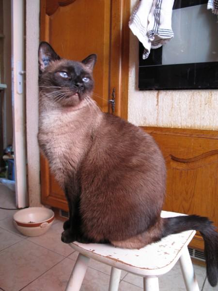 Moussette était une magnifique siamoise de plus de 10 ans, retrouvée abandonnée dans un HLM. C'était une minette très câline, et adorait partir en vacances. Chaque été était attendu avec impatience. Elle était spécialisée dans la chasse aux lézards. Moussette avait une dizaine d'années quand elle s'est éteinte. Après de belles années de vie.