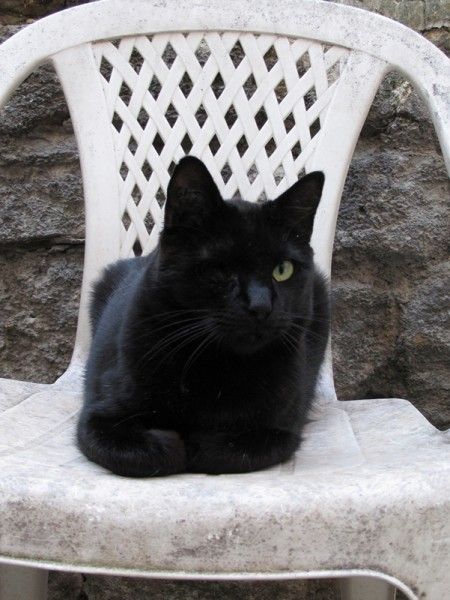 Ce gentil chat s'appelle Mozart et est arrivé du sauvetage de Rambouillet en 2010. Là-bas, il était comme tous les autres chats complètement négligé, et n'ayant pas été soigné pour son oeil, il a dû être énuclé.
