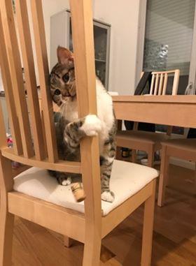 je vous envoie quelques nouvelles de Nilco. Il mange très bien, c'est un gentil chat très joueur et câlin, nous sommes gagas de lui.